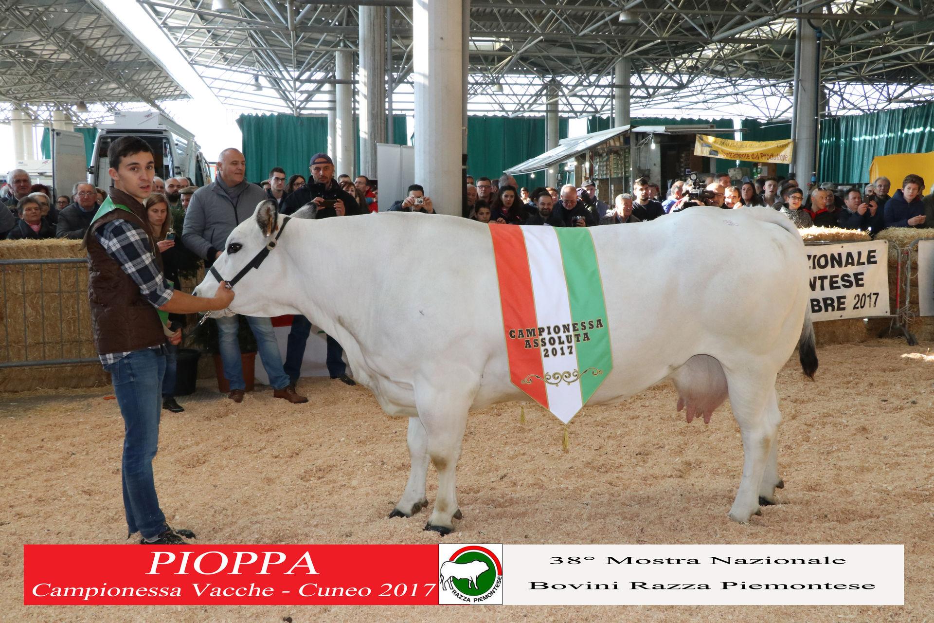 La Guida - Toro Uruc e bovina Pioppa si aggiudicano la Mostra della Piemontese