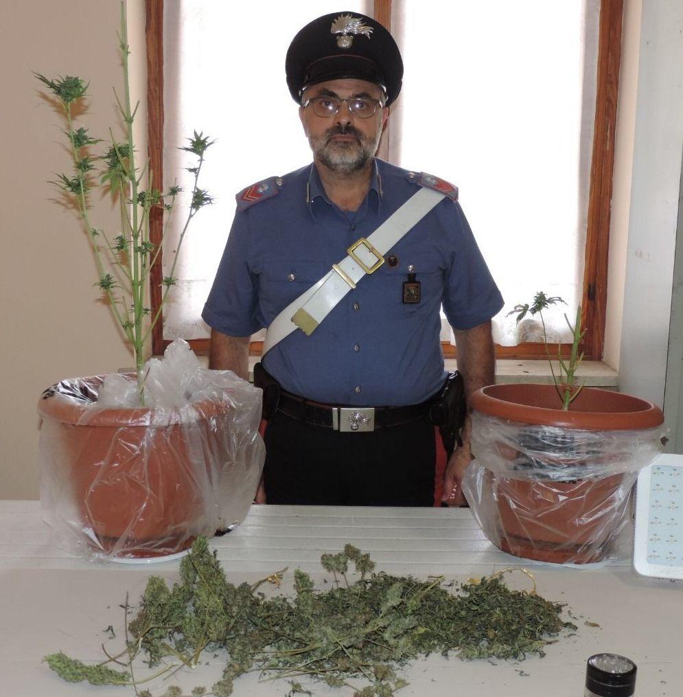 La Guida - Marijuana coltivata in casa, denunciati due ventenni