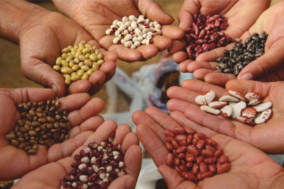 La Guida - Una Casa diffusa della biodiversità agraria