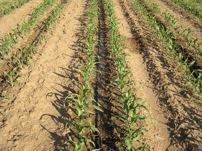 La Guida - Boves e Oltregesso, garantita l'acqua per irrigare i campi