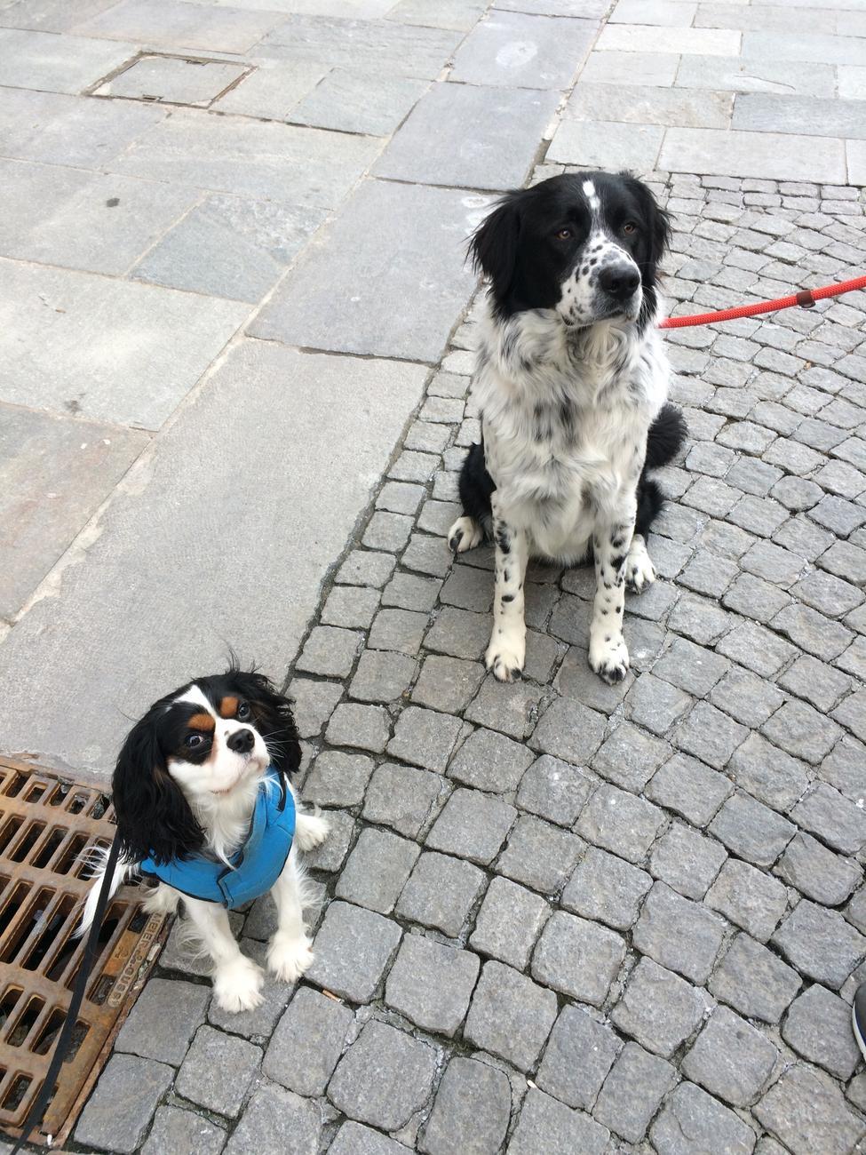 La Guida - A Cuneo un corso di formazione per proprietari di cani