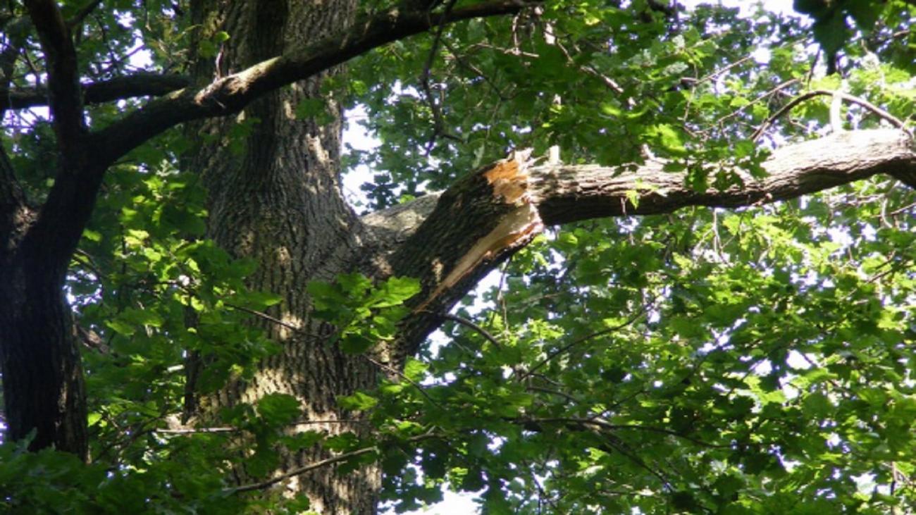 La Guida - Boves, cade da un albero e muore