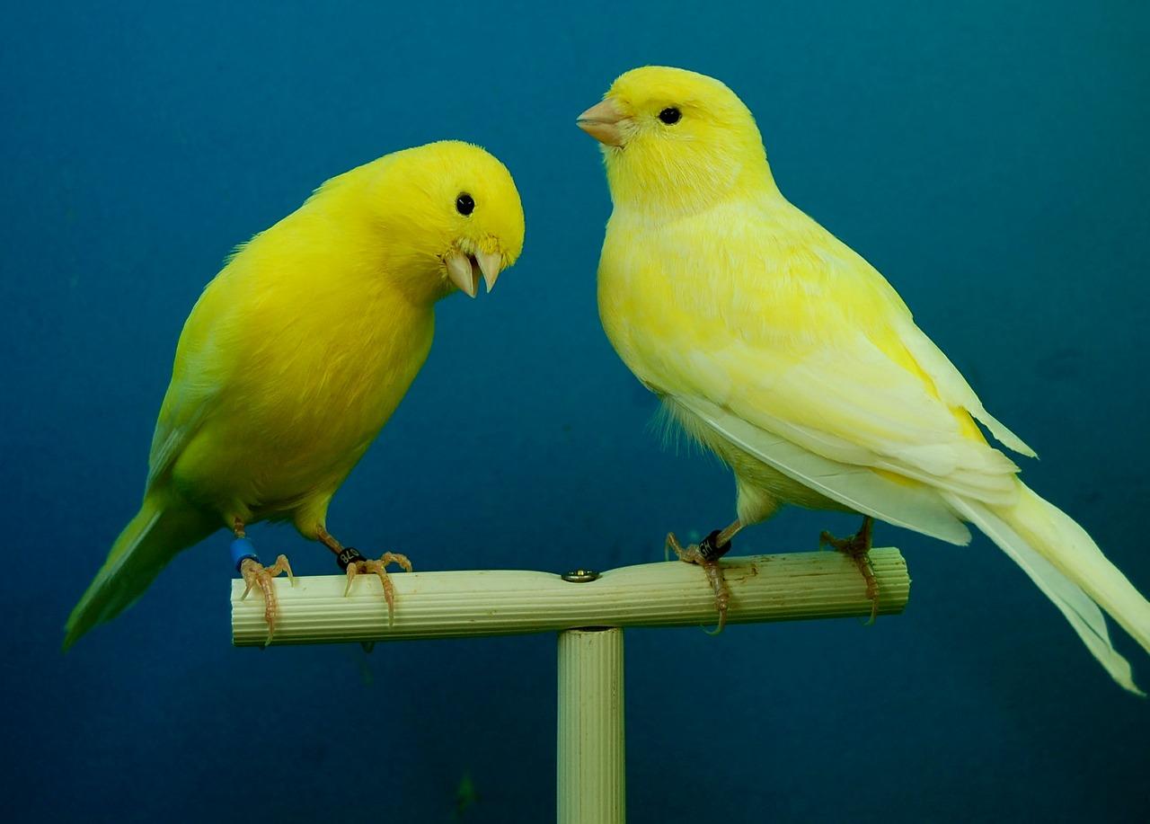 La Guida - Nuovo stop agli avicoli in mercatini e fiere