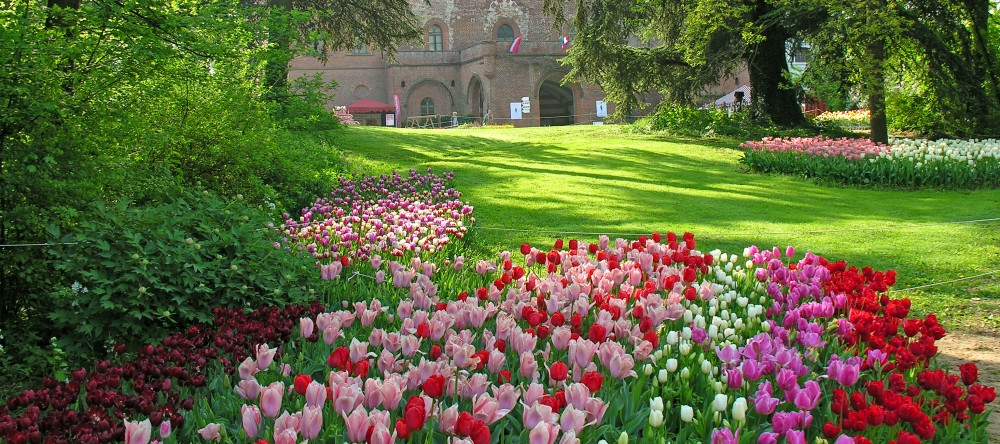 La Guida - Primavera in festa con Messer tulipano