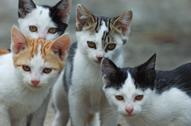 La Guida - Il Comune di Cuneo invita a segnalare i gatti randagi