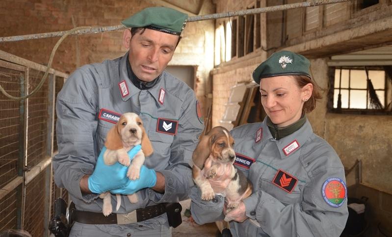 La Guida - Sgominata banda dedita  al traffico illecito di cuccioli