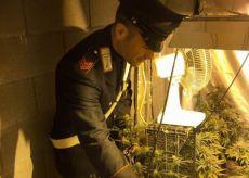 La Guida - Droga coltivata in casa, arrestato dai Carabinieri giovane cuneese