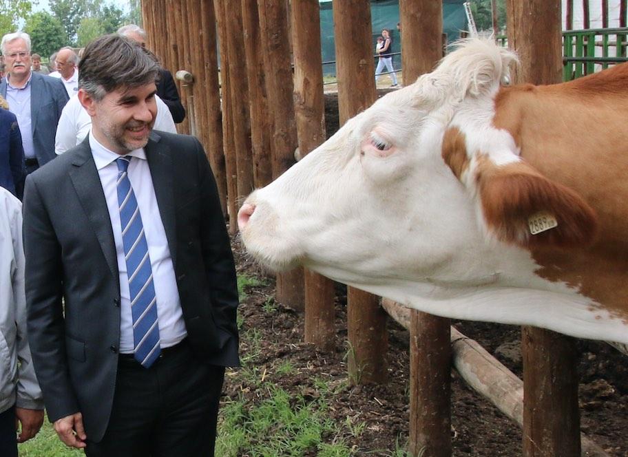 La Guida - Ci sono 31 milioni di euro per la zootecnia