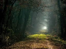 La Guida - Perdersi nel bosco… Le fiabe e i riti di iniziazione