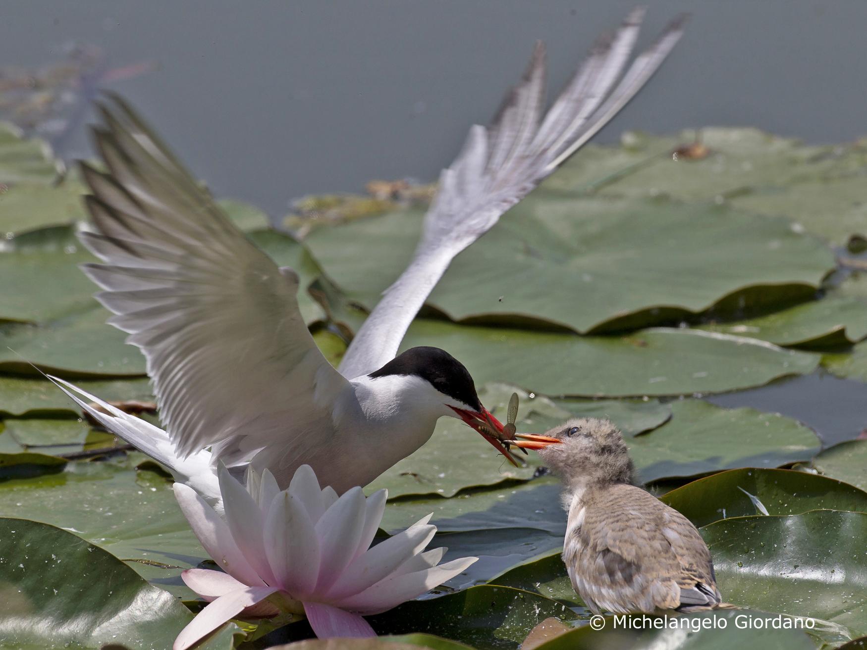 La Guida - Gli uccelli delle zone umide