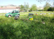 La Guida - Furto di arnie di api, individuato il responsabile