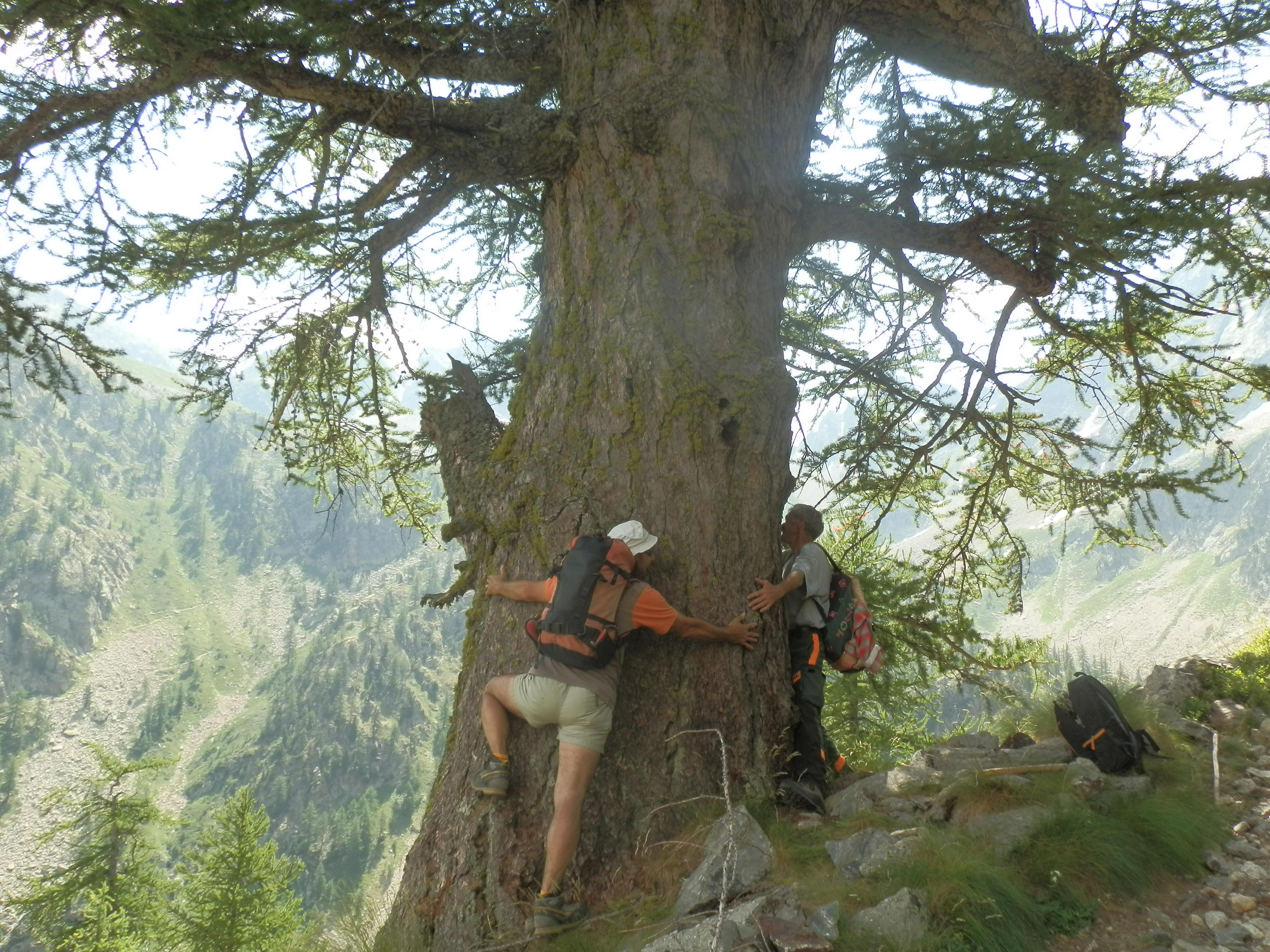 La Guida - Vinadio, squadra operai forestali al lavoro