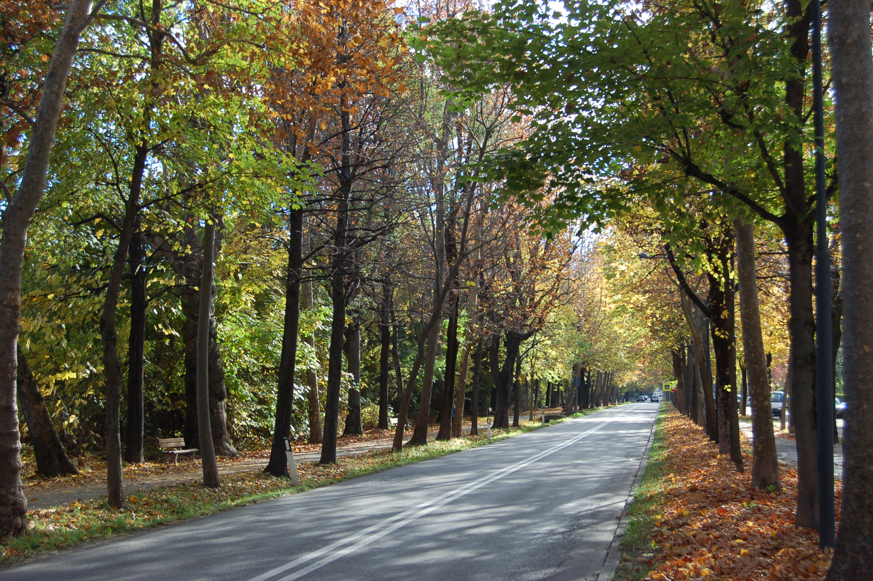 La Guida - Investita sul viale Angeli, non è in pericolo