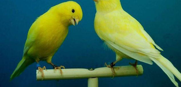 La Guida - Gli avicoli tornano nel mercato di Fossano