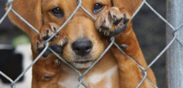"""La Guida - """"L'Oasi del Cane"""" chiude, 110 cani senza casa"""