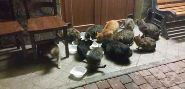La Guida - Quale destino per i gatti sfrattati dalla Club House di Farigliano?