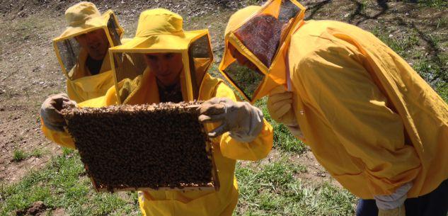 La Guida - Al parco fluviale una giornata per le api