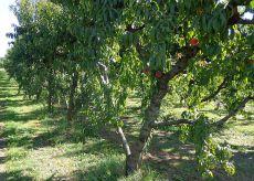 La Guida - A Cuneo la manifestazione dei braccianti agricoli