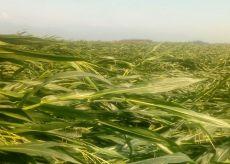 La Guida - Ancora nubifragi nel Cuneese