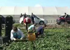 La Guida - Lavoratori in nero e minorenni nelle campagne di Peveragno