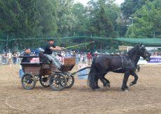 La Guida - A Dronero la rassegna del cavallo di Merens