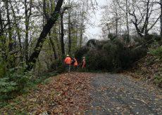 La Guida - Maltempo, alberi caduti e danni a Peveragno