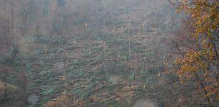 La Guida - Valle Pesio, strage di alberi