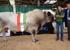 La Guida - Mostra e sapori della carne: la Piemontese protagonista al Miac