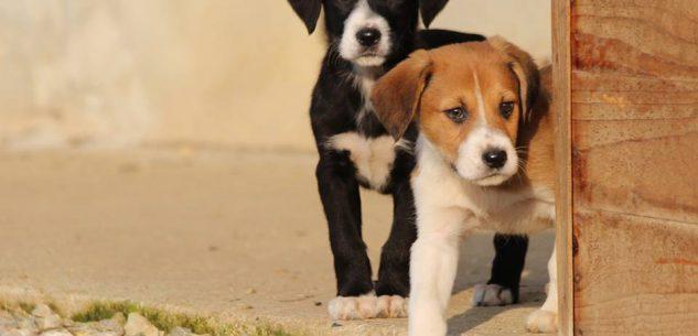 La Guida - Donare farmaci per cani e gatti