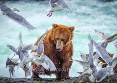La Guida - La fotografia naturalistica e di viaggio di Marco Urso