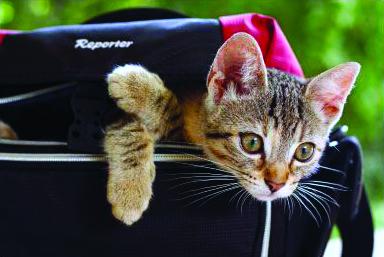 """La Guida - Concorso fotografico """"Scatto felino"""""""
