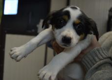 La Guida - Nel monregalese oltre cento cani cercano casa