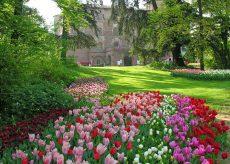 La Guida - Passeggiate virtuali tra i tulipani del Castello di Pralormo