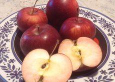 La Guida - Censimento della mela Gamba Fina di Caraglio