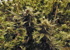 La Guida - Fermato con 122 chili di marijuana in auto, arrestato
