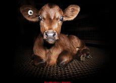 La Guida - A Cuneo si proietta un film sulla violenza sugli animali