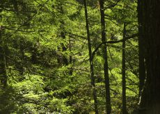La Guida - Finanziati i piani di sviluppo forestale per tre milioni di euro