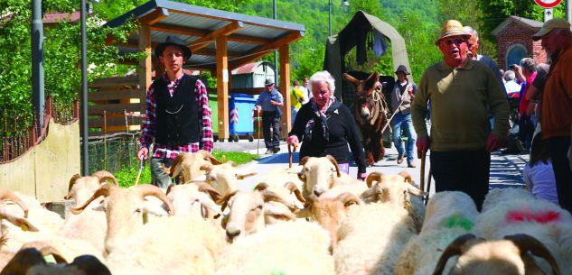 La Guida - Le pecore invadono Roaschia
