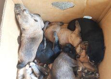 La Guida - Appello per dieci cagnolini abbandonati a Revello, stanno bene
