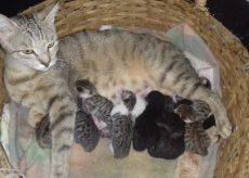 La Guida - Undici gattini in cerca di una casa