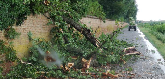 La Guida - Racconigi, crolla un altro albero del Castello