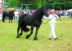 La Guida - A Dronero la mostra del cavallo di Mérens