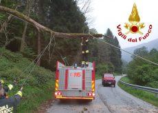 La Guida - Albero pericolante, intervento dei Vigili del fuoco