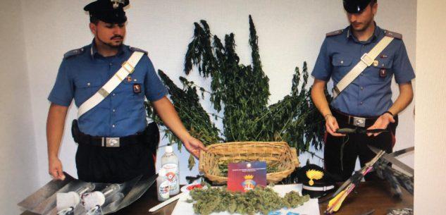 La Guida - Piante di cannabis, spada e altro in casa: arrestato 54enne