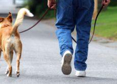 La Guida - Le regole per passeggiare con il cane in zona gialla