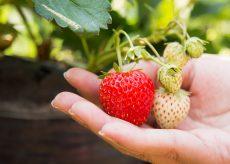 La Guida - Per imparare a conciliare agricoltura e natura