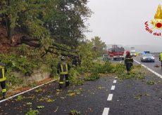 La Guida - Alberi caduti sulla Torino-Savona