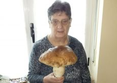 La Guida - Un fungo di 1,2 kg trovato nei boschi di Peveragno