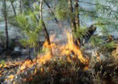 La Guida - La Regione dichiara lo stato di massima pericolosità per incendi boschivi
