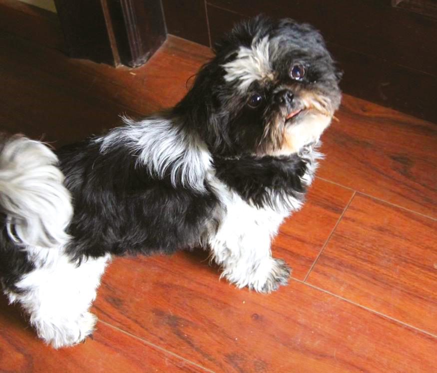 foto della cagnolina smarrita